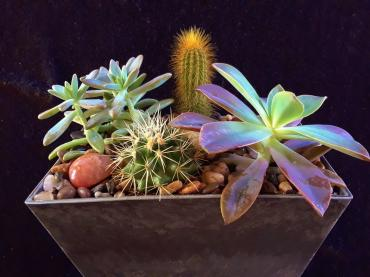 """Can\'t Touch This\"" Cacti & Succulent Garden"
